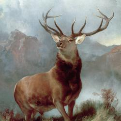 Monarch Of The Glen - Fine Art